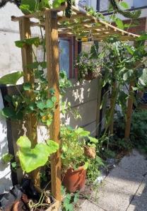 verticale tuin Op dit moment hebben de pompoen en de Oost-Indische kers zich eraan vastgeklampt (na een duwtje in de goede richting).